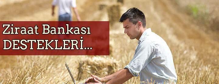 Ziraat Bankası 5 Yıl Geri Ödemesiz Hayvancılık Kredisi ce Devlet Desteği