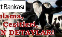 Ziraat Bankası Hayvancılık Kredisi (Şartları, 2018 Faiz Oranı ve Hesaplama)