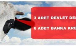 Büyükbaş Hayvancılık Destekleri 2020 (Kredisi Veren Bankalar, Hesaplama)