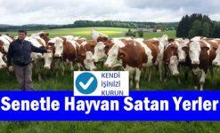 Senetle Hayvan Satan Firmalar (Kendi İşinizi Kurun)